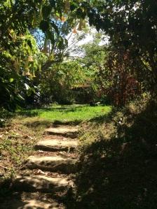 Jungle Faery Hobbit Trail