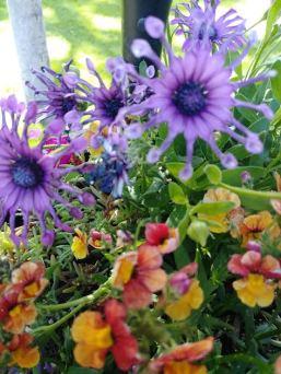 flowers at earthsong 2019 mermanor