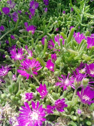 ice flowers springs preserves